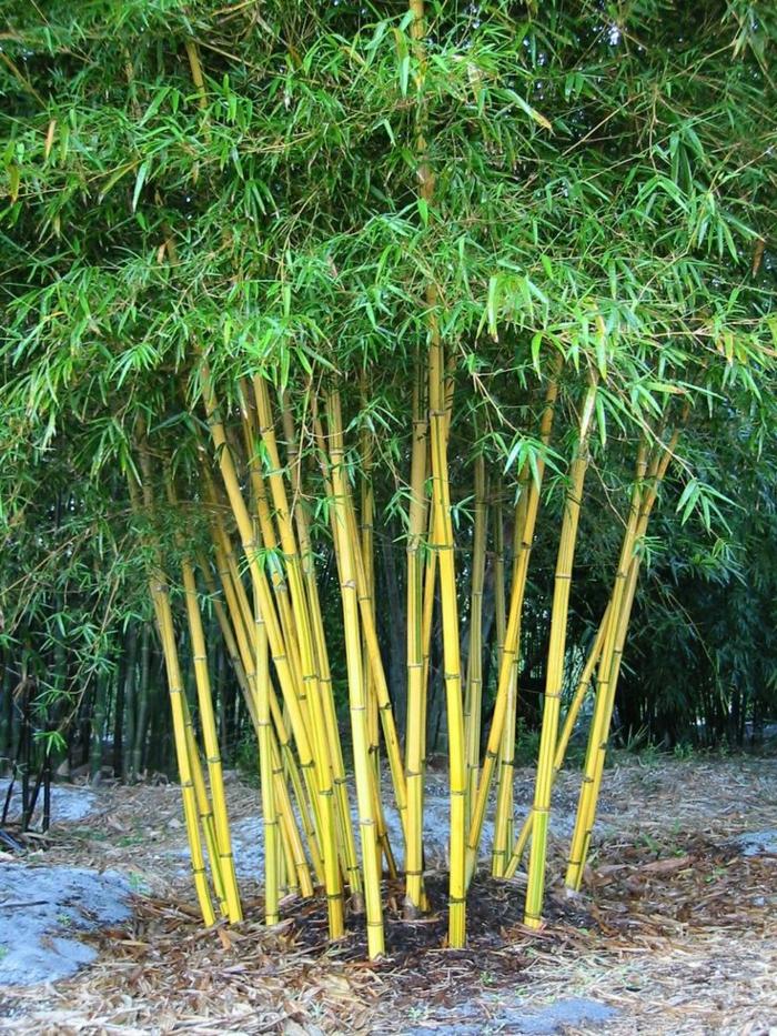 Comment Planter Des Bambous Dans Son Jardin - Archzine.fr intérieur Déco Jardin Bambou