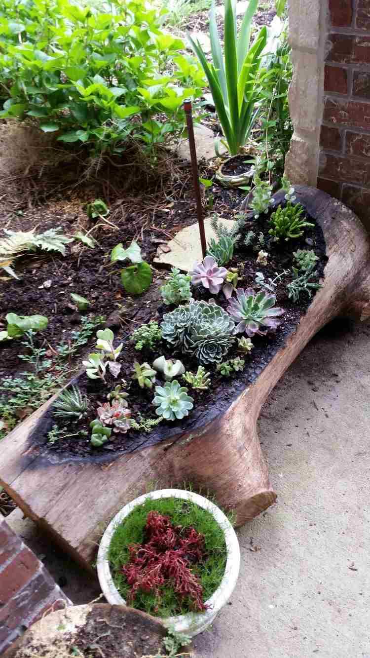 Déco Bois Flotté & Plantes Succulentes - La Nature S serapportantà Ecorces Jardin