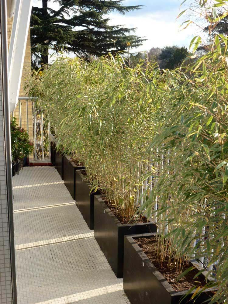 Épinglé Par Hanne Stausholm Sur Dazzling Deco - Gardens tout Déco Jardin Bambou