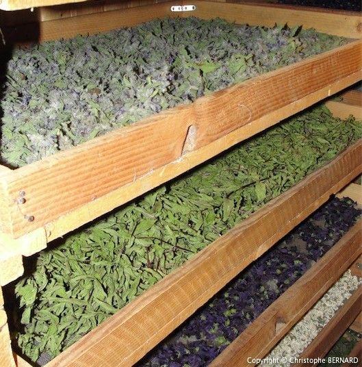Faire Sécher Les Plantes Médicinales | Faire Sécher Des concernant Sechoir De Jardin