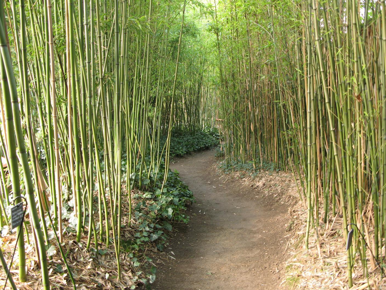 Jardin Japonais Bambou - Pivoine Etc intérieur Déco Jardin Bambou