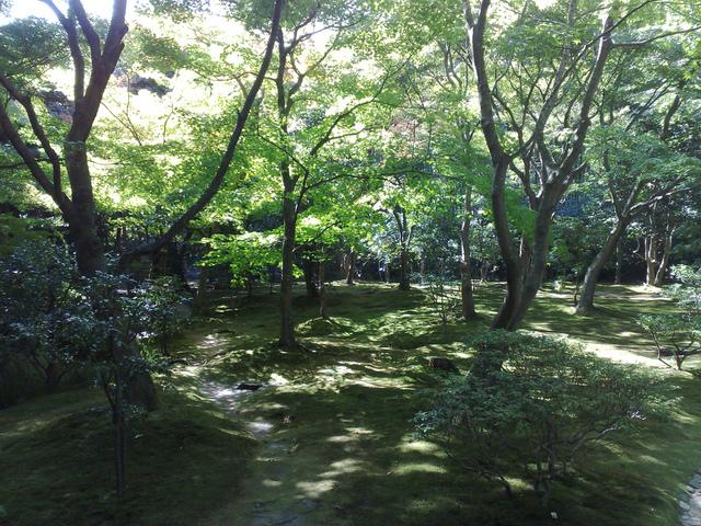 Jardiner Sous Un Arbre Ou En Sous-Bois serapportantà Ecorces Jardin