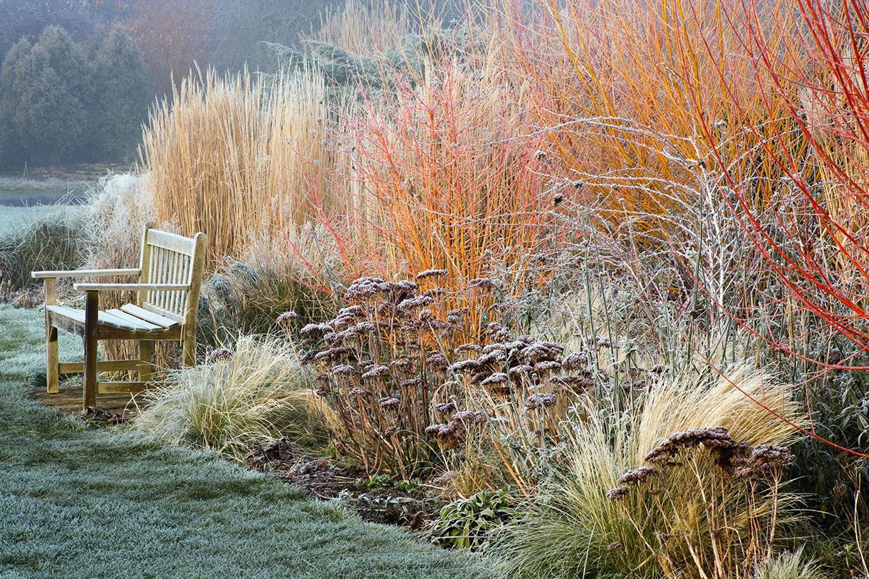 Les Belles Surprises De L'Hiver Au Jardin En 6 Plantes avec Ecorces Jardin