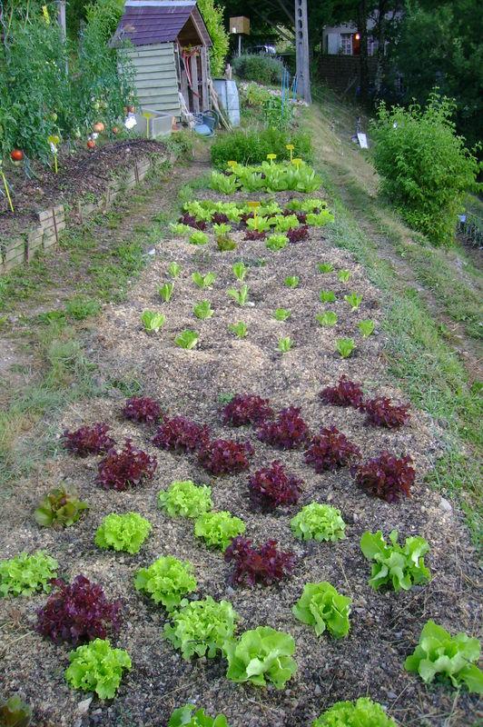 Les Copeaux De Bois En Paillage Les Copeaux De - Le Jardin pour Lithothamne Jardin