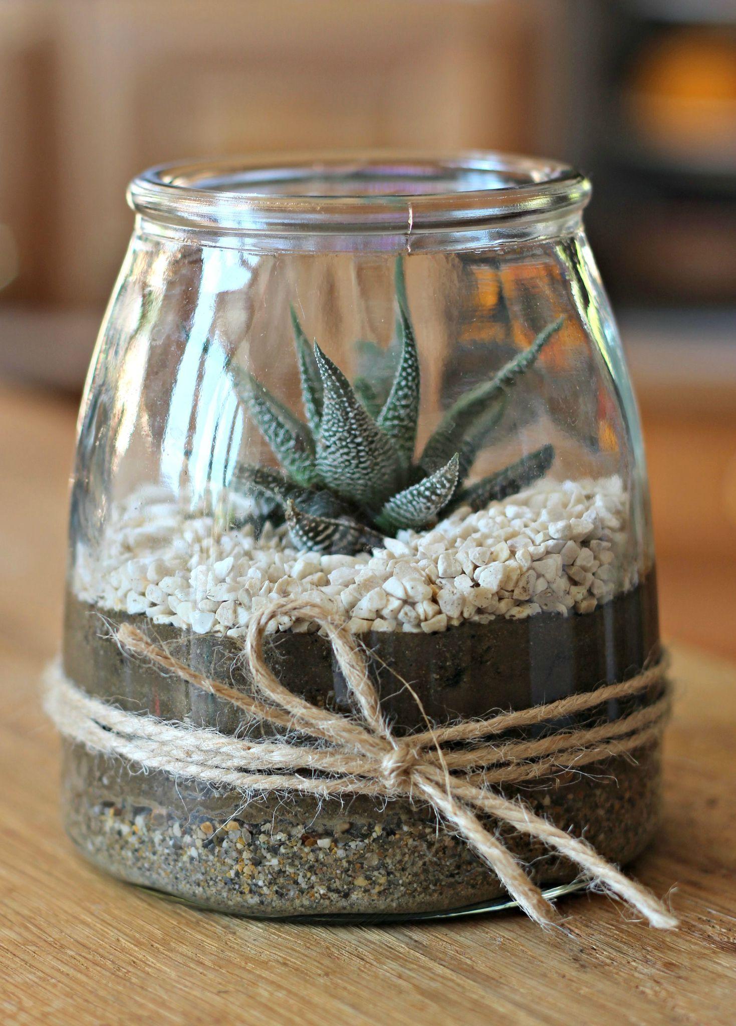 Plantation De Succulente : Diy Végétal & Cadeau Gourmand tout Idée Cadeau Jardin