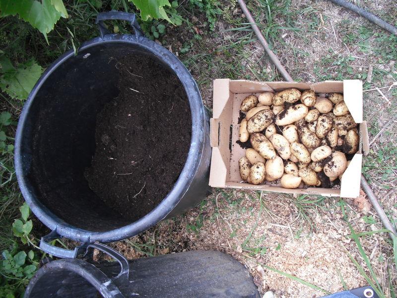 Pomme De Terre En Silo : Système Très Productif - Le encequiconcerne Lithothamne Jardin