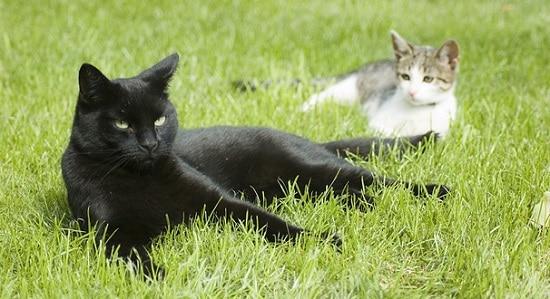 Repousser Les Chats : 6 Répulsifs Chats Naturels Pour Éduquer destiné Repulsif Chat Jardin