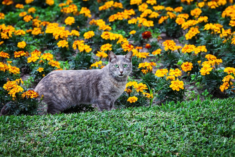 Répulsif Pour Chat : Comment Le Choisir Et L'Utiliser concernant Repulsif Chat Jardin