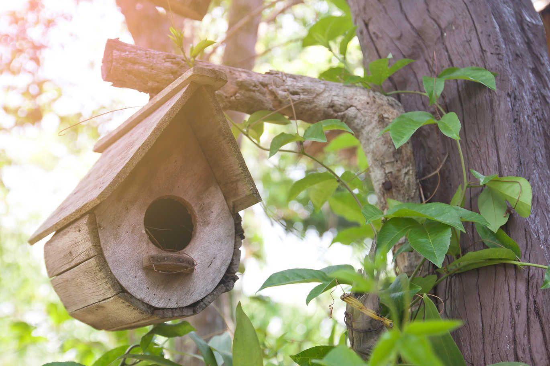 Revue De Blogs Construire Une Cabane A Oiseaux Passion Destine Construire Une Cabane De Jardin Agencecormierdelauniere Com Agencecormierdelauniere Com