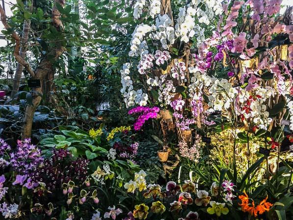 Serre De Jardin Orchidée - Veranda Et Abri Jardin à Petite Serre De Jardin Pas Cher