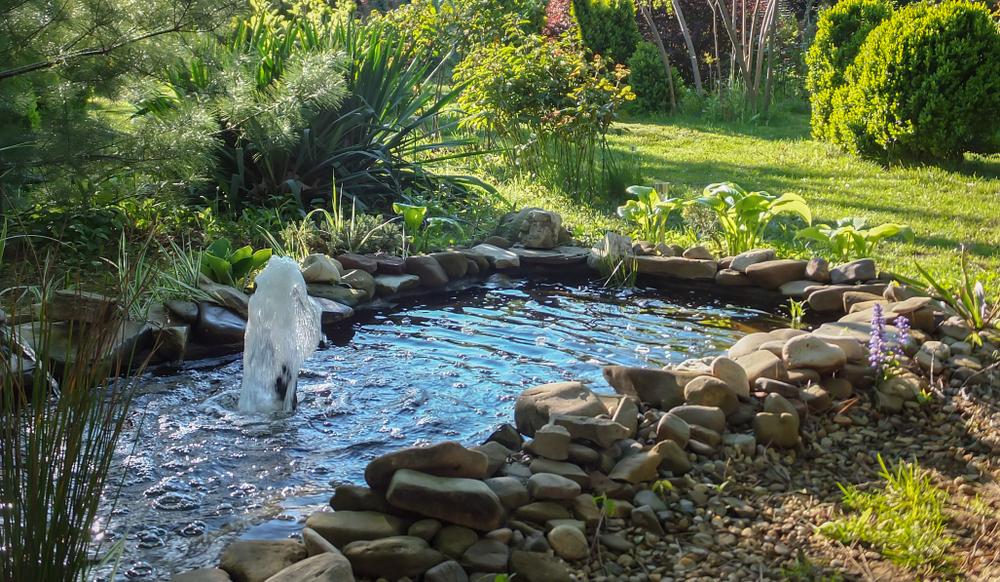 Tarifs Et Prestations D'Aménagement De Milieu Aquatique pour Exemple D Aménagement De Jardin