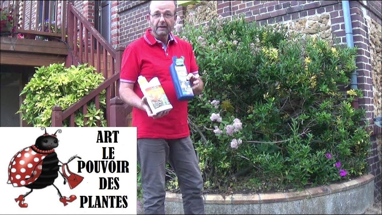 Tuto Jardin: Utilisation Du Savon Noir Comme Insecticide pour Savon Noir Jardin