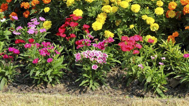 Comment Planter Des Fleurs Dans Son Jardin - Blog Jardin destiné Le Jardin Des Fleurs