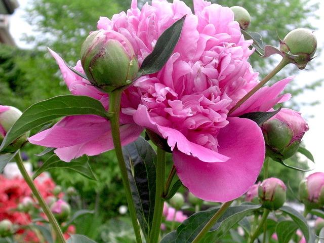 De L'Art Floral Avec Les Fleurs Du Jardin tout Le Jardin Des Fleurs
