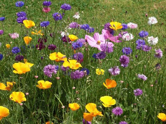 Fleurs Du Jardin - Photo De Les Fermes De Florence, Les concernant Le Jardin Des Fleurs