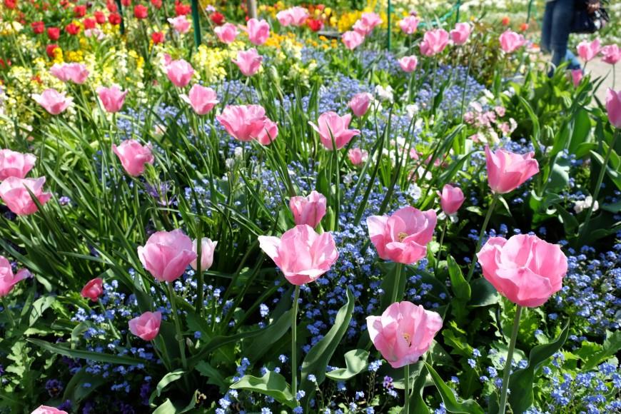 Giverny : Le Jardin De Claude Monet Au Printemps à Le Jardin Des Fleurs