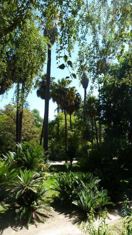 Le Jardin Botanique De L'université De Lisbonne | Le Monde pour Jardin Botanique Lisbonne