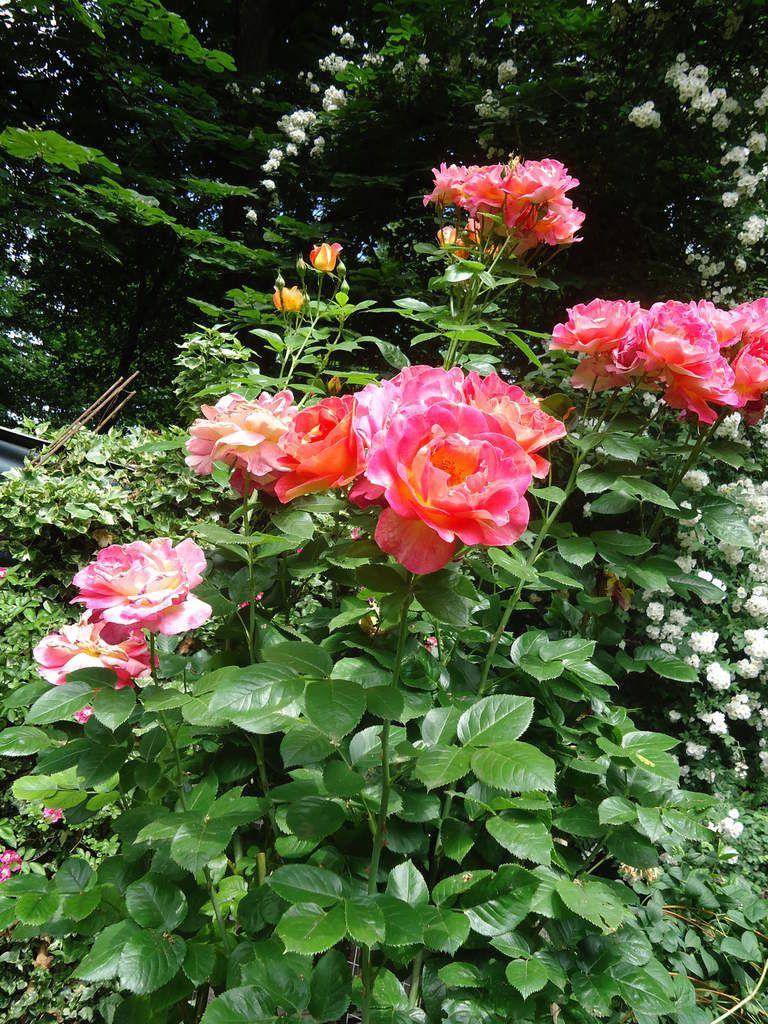 Jardin Fleuri Lyon - AgenceCormierDelauniere.com ...