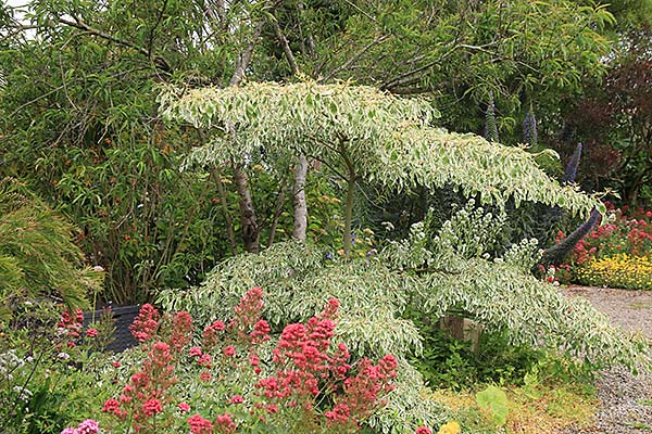 Le Jardin D'olga À Guimaëc - Arrosoirs Et Sécateurs (Avec pour Arrosoirs Et Sécateurs