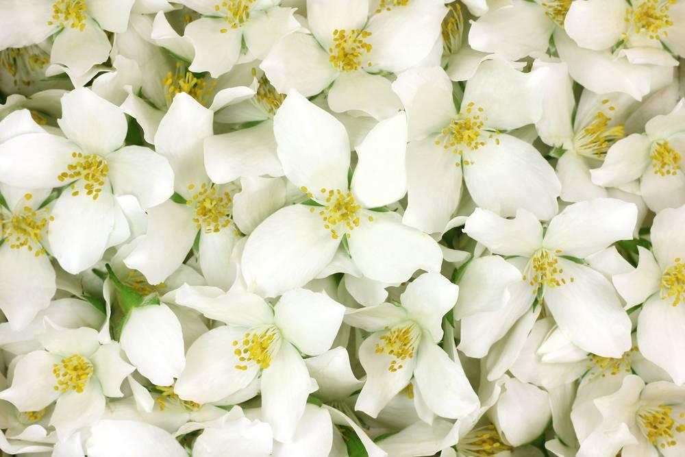 Le Parfum Des Fleurs - Le Jardin Des Fleurs destiné Le Jardin Des Fleurs