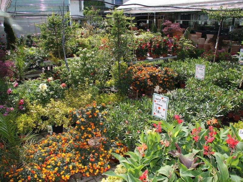 Le Point Vert - Eichinger : Décoration Hochstatt 68720 tout Point Vert Le Jardin
