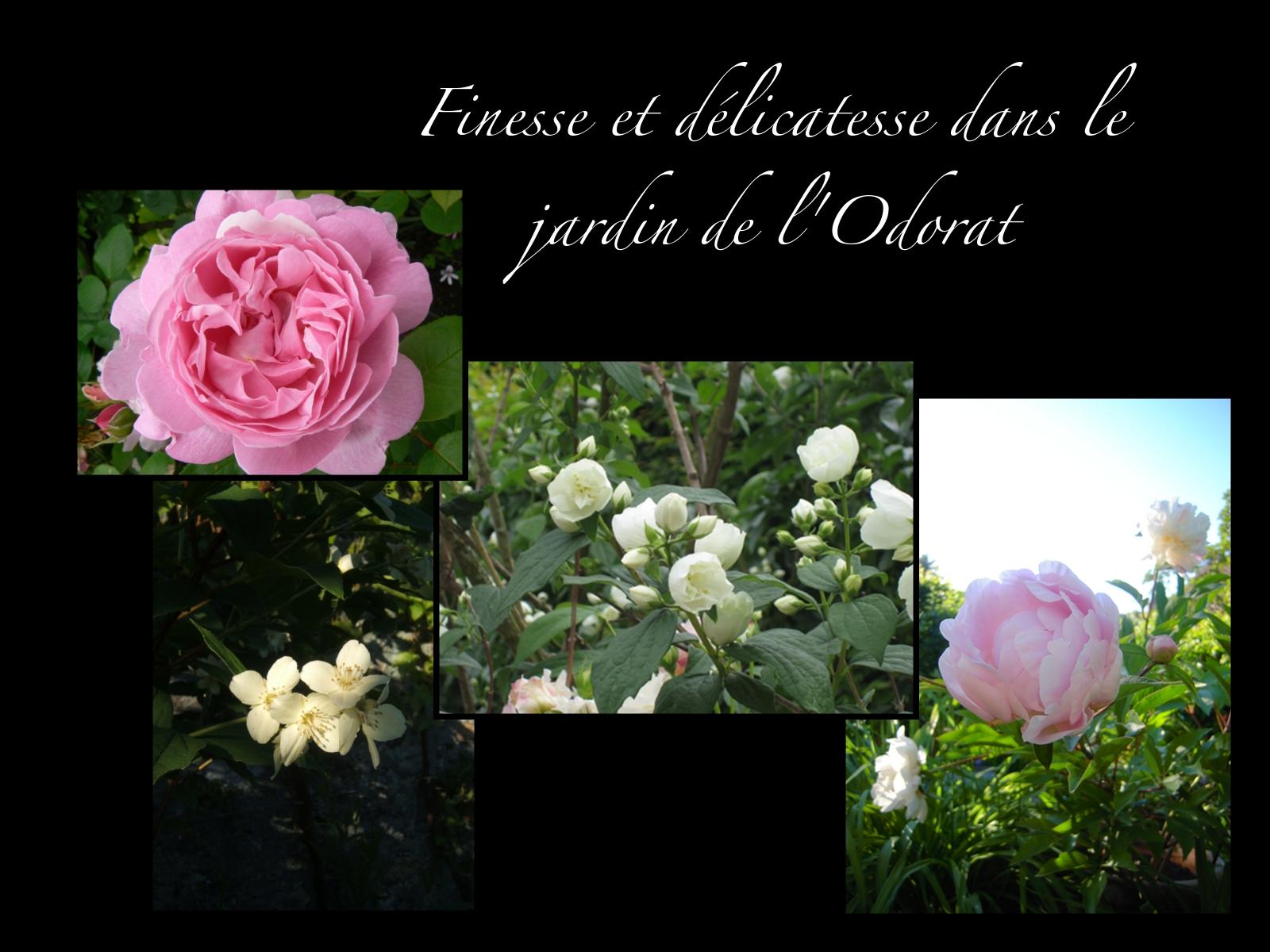 Les Fleurs De Début Juin - Le Jardin Des Cinq Sens - Yvoire serapportantà Le Jardin Des Fleurs
