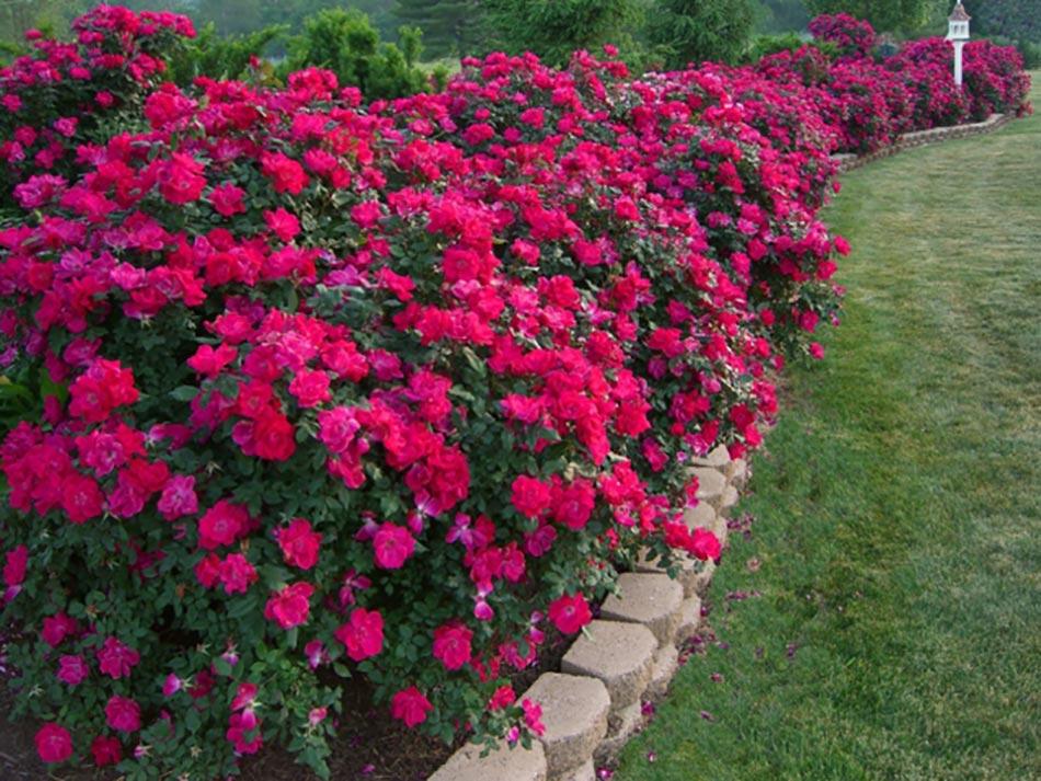 Les Jardins Aux Plates-Bandes Fleuries à Le Jardin Des Fleurs