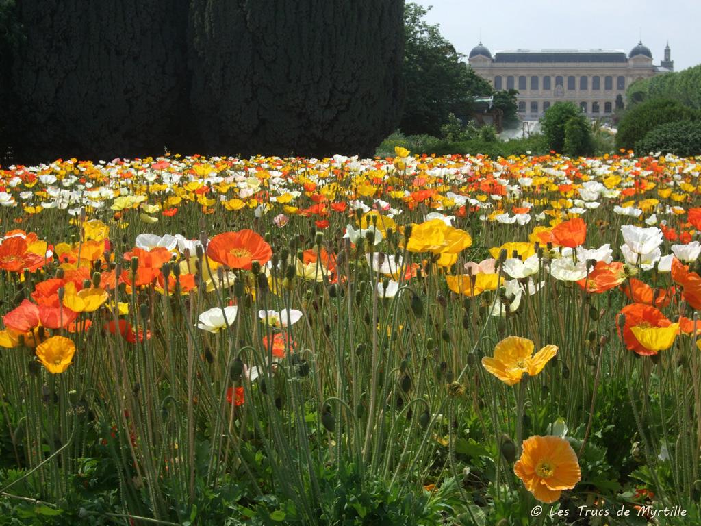 Les Trucs De Myrtille: Les Pavots Du Jardin Des Plantes encequiconcerne Le Jardin Des Fleurs