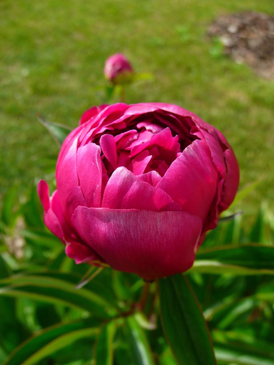 Notre Jardin Secret.: Des Fleurs En Pagaille!!! destiné Le Jardin Des Fleurs