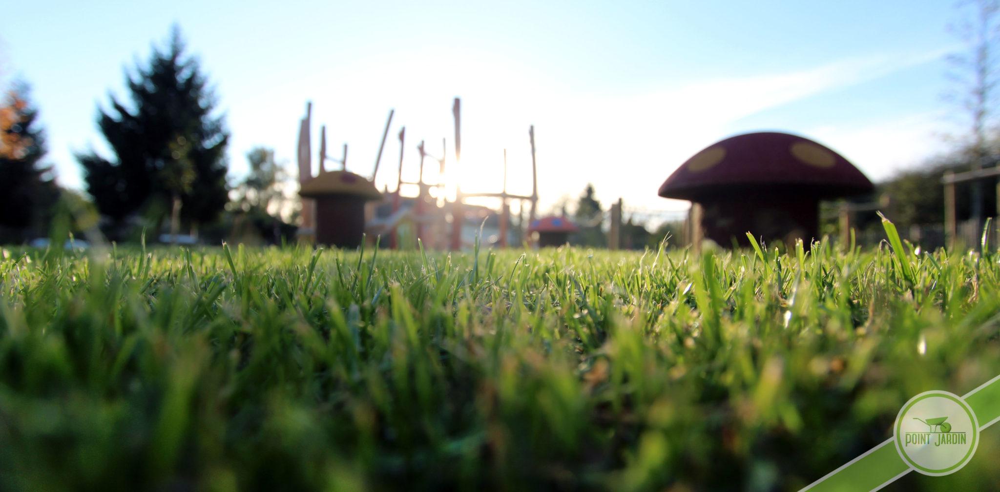 Un Beau Gazon En 6 Étapes - Point Jardin serapportantà Point Vert Le Jardin