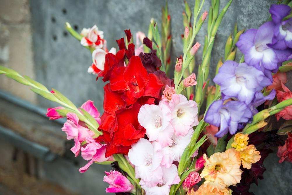 Zoom Sur Les Fleurs D'Été ! - Le Jardin Des Fleurs concernant Le Jardin Des Fleurs
