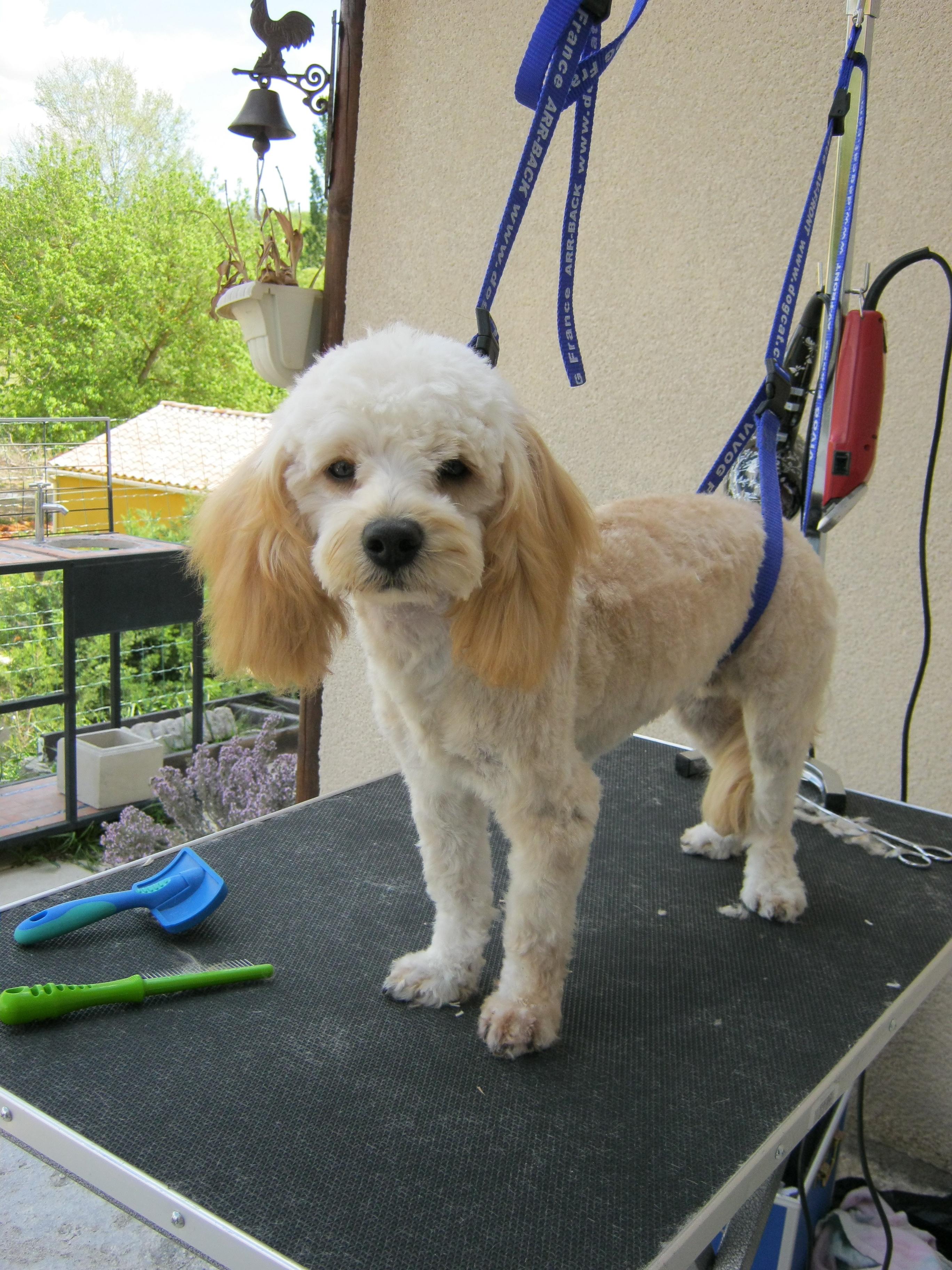Au Poil Fou | Toilettage Canin À Domicile Et Garde D destiné Toiletteuse A Domicile