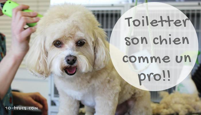 Calmer Un Chien, 10 Trucs À Découvrir dedans Toiletter Son Chien