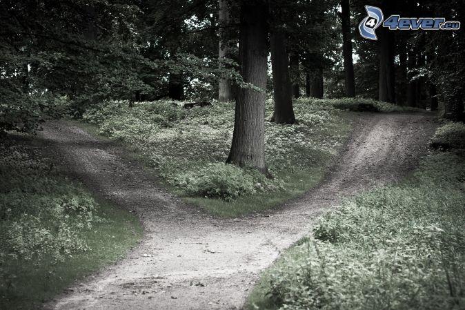 Chemins Forestier à Carrefour 7 Chemins