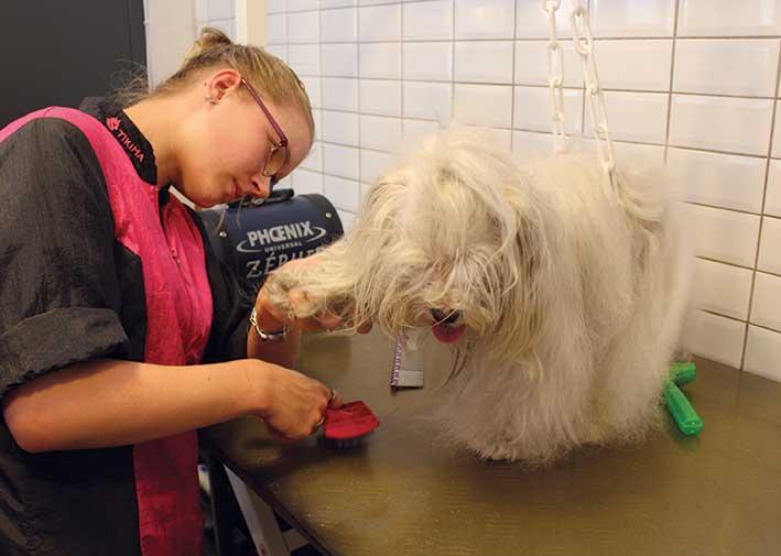 Dog In The City, Un Salon De Toilettage Pour Chien. pour Toiletteuse Pour Chien