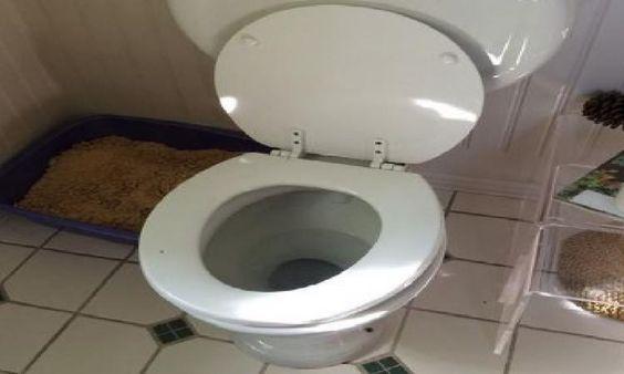 La Toilette Est Bouchée Et Vous N'Avez Pas De Siphon? 5 destiné Toilettes Bouchées