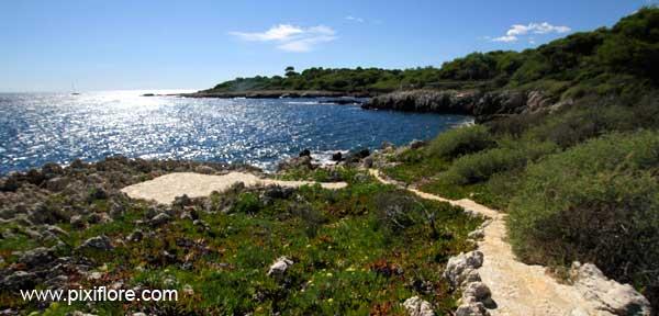 Les Balades De Pixiflore: Le Cap D'Antibes tout Chemin Du Puy Antibes