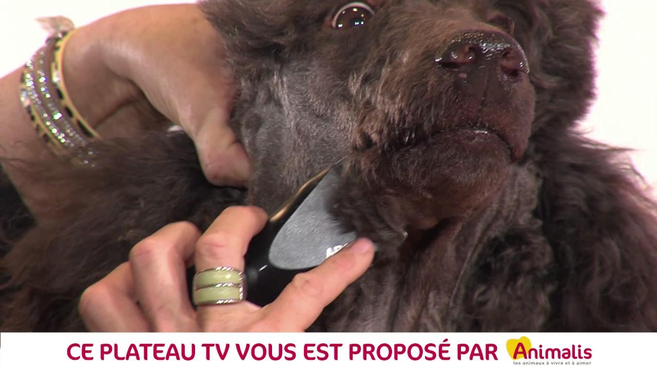 Paris Animal Show 2017 - Comment Bien Toiletter Son Chien serapportantà Toiletter Son Chien