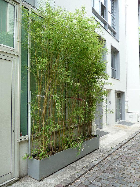 Rideaux De Bambous | Bambous Jardin, Jardiniere Bambou Et serapportantà Rideau Exterieur Balcon