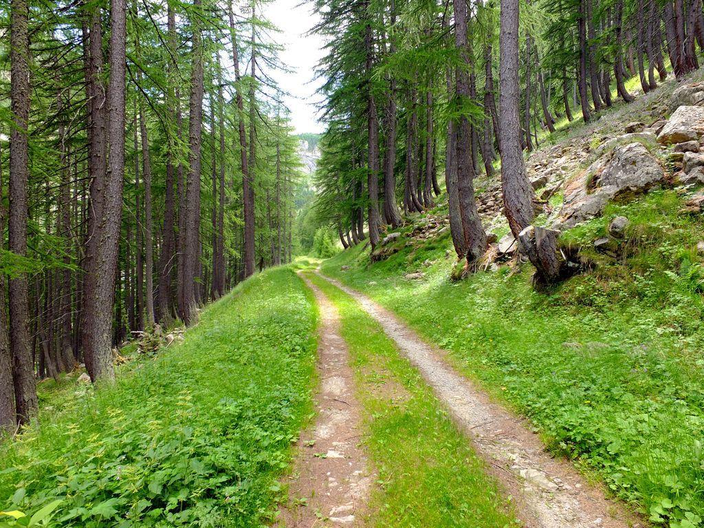 Sur Les Petits Chemins Des Alpes Du Sud En Juillet 2020 dedans Les Chemins Du Sud