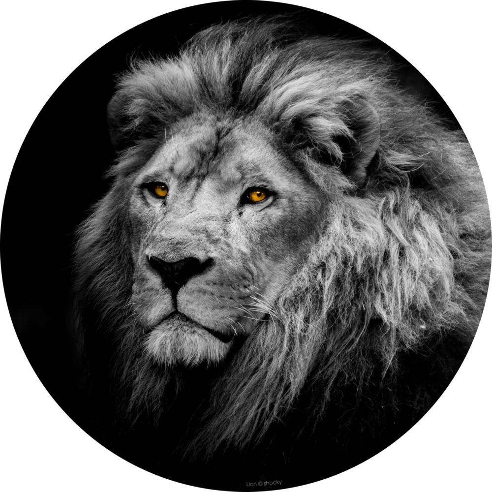 Décoration Murale Impression Sur Plexiglas Regard Lion encequiconcerne Bricorama Deco